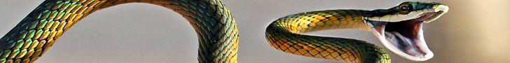 Змеи и рептилии