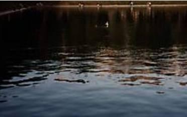 Фото: Патриаршие пруды вечером