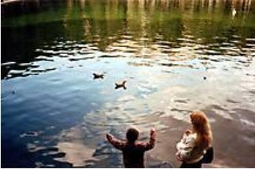 Фото: утки на Патриарших прудах