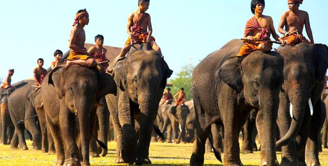 Махаут: Погонщик слонов в Индии