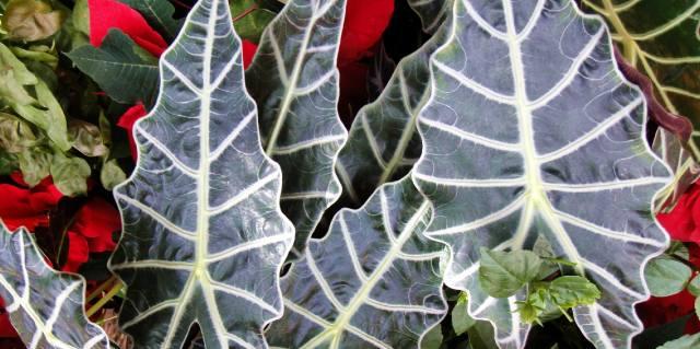 Польза ядовитых растений