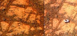 Фото: грибы на Марсе — интересные факты