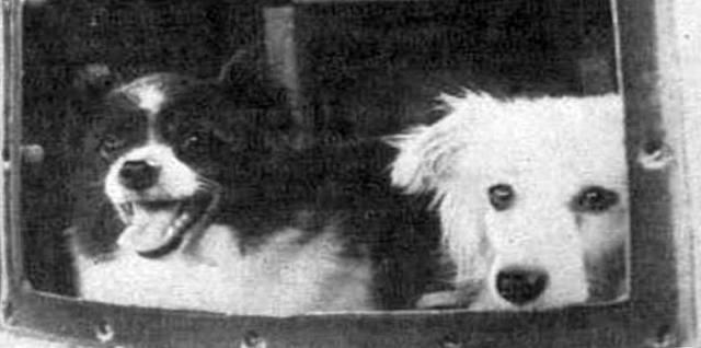 Цыган и Дэзик - первые собаки в космосе