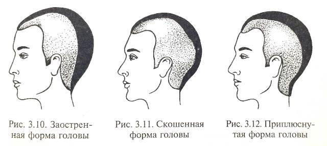 Как определить характер мужа по форме головы?