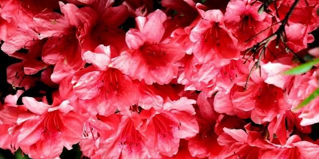 Ядовитые цветы в домашних условиях