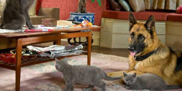 Какие домашние животные вам подходят?