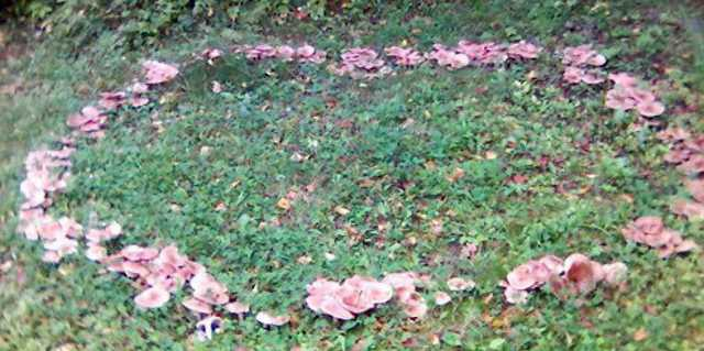 Ведьмины круги на полях - что это такое?