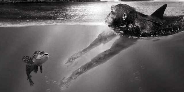Акватическая теория происхождения человека от водной обезьяны