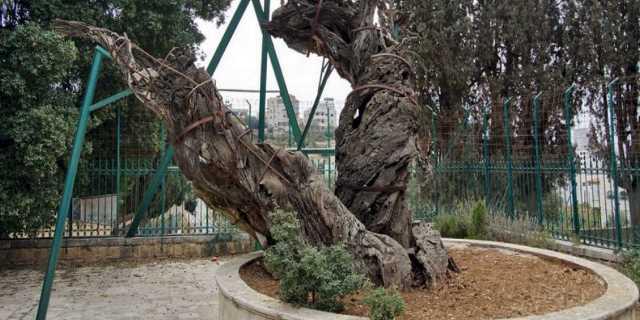 Мамврийский дуб Авраама