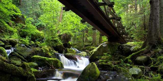 Шварцвальдский лес в Германии - мистические легенды