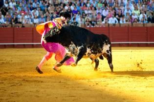 Фото: коррида в Испании — интересные факты