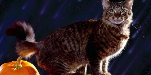 Ермилин день - кошачий праздник