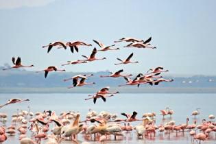 Фото: солёное озеро Алики — интересные факты