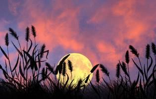 Фото: лунный календарь на август