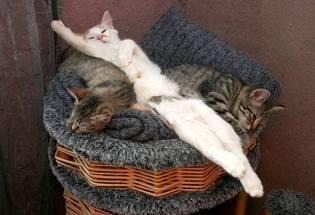 Фото: где спит кошка? — интересные факты