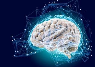 Фото: мозг — как он работает, интересные факты