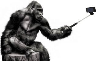Фото: телефон превращает человека в обезьяну