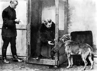 Фото: животные-телепаты Бехтерева, интересные факты