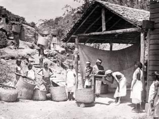 Фото: как чай из Китая в Индию попал, интересные факты