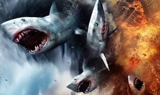 Фото: охотники на акул — интересные факты