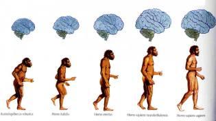 Фото: эволюция мозга — интересные факты