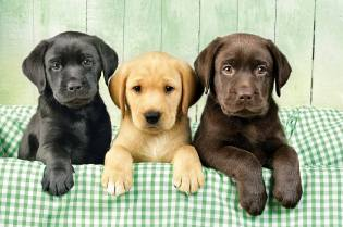 Фото: собака — как выбрать?