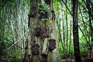 Фото: похороны в дереве — интересные факты