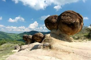 Фото: трованты — живые камни, интересные факты