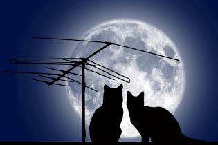 Фото: лунный календарь на год
