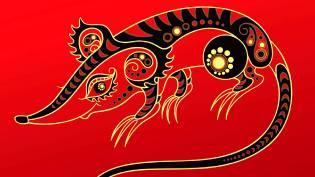 Фото: Крыса (Мышь) — восточный календарь