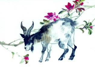 Фото: Овца (Коза) — восточный календарь