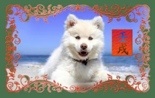 Фото: Собака — восточный календарь