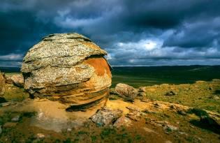 Фото: живые камни трованты — интересные факты