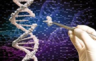 Фото: геном человека и регенерация — интересные факты