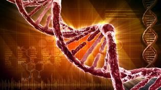 Фото: ДНК генной инженерии — интересные факты