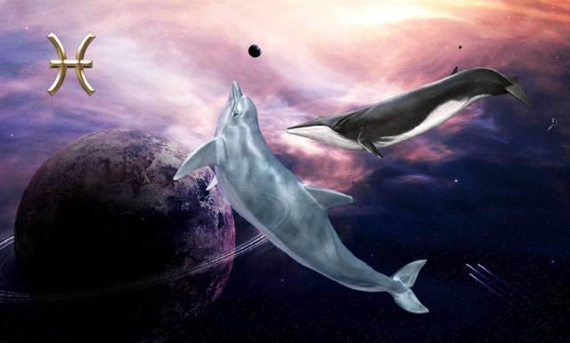 Фото: Рыбы — гороскоп на декабрь