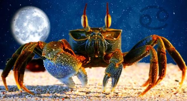 Фото: Рак — точный гороскоп на год Крысы