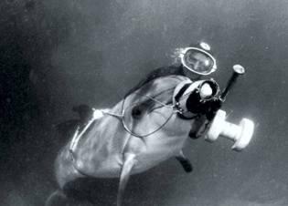 Фото: боевые дельфины в Крыму, интересные факты