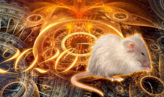 Фото: Каким будет Новый год Крысы?