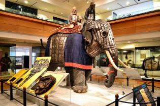 Фото: боевые слоны — интересные факты