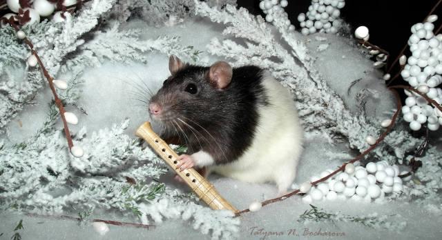 Каким будет Новый год Крысы?
