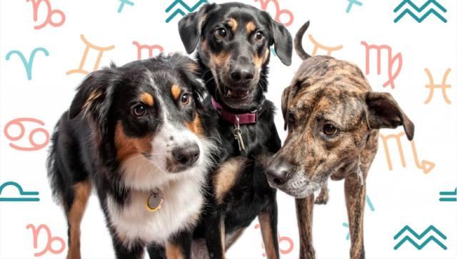 Какие собаки подходят вам по знаку Зодиака?