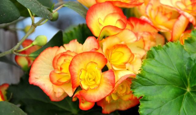 Какие домашние растения цветут зимой?