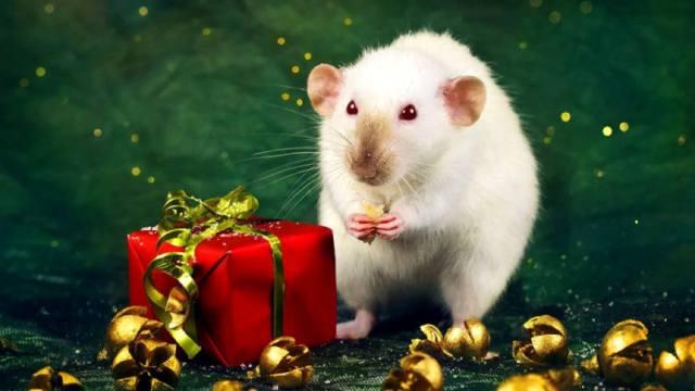 Год Белой Крысы — гороскоп для всех знаков Зодиака
