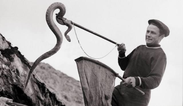Профессия — змеелов: Охотники за змеями