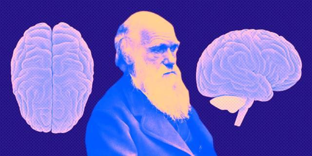 Эволюция мозга человека закончена?