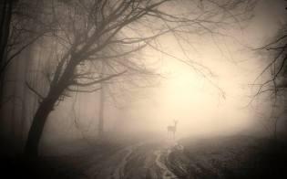 Фото: мистический туман, интересные факты