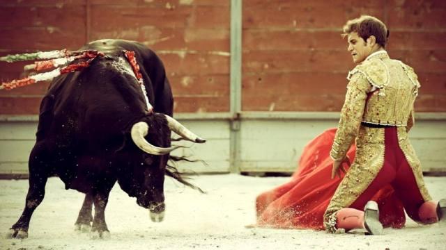 Испанская коррида — запрет боя быков в Каталонии
