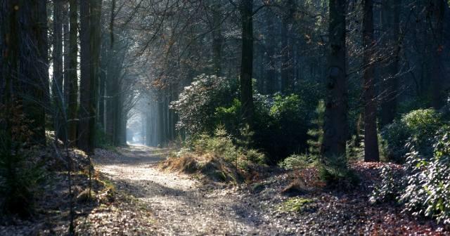 Призраки ведьминой дороги леса Пачауг
