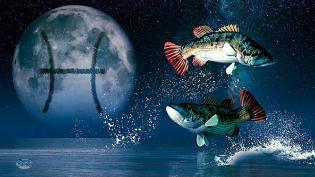 Фото: Рыбы — астропрогноз на июль